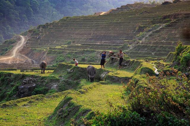 Ideas For Trekking In Vietnam