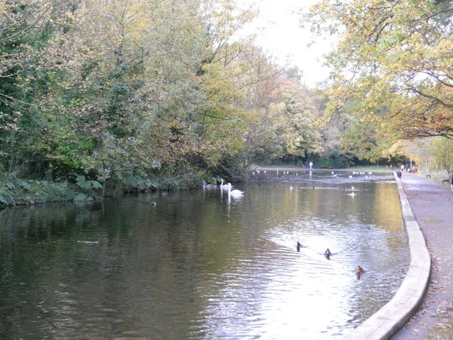 Walk the River Dodder in Dublin - swans