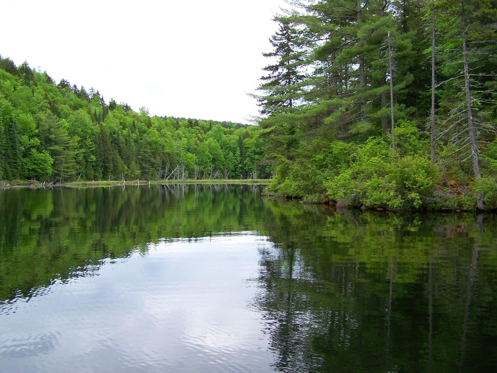 Pêche Lac Blanc, Daniel Lefaivre, pêche à la truite, pêche Mauricie, pêche St-Alexis-des-Monts