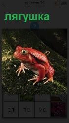 На мхе в темном лесу сидит оранжевая лягушка с выпученными глазами, готовая прыгать