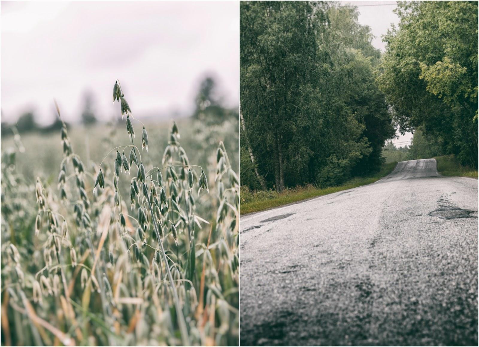 luonto, nature, Porkkalanniemi, Kirkkonummi, Suomi, Finland, visitfinland, experiencefinland, naturelovers, outdoorphotography, outdoors, Visualaddict, valokuvaaja, Frida Steiner, luontovalokuva, pelto, metsä, kaura, tie