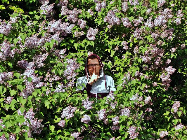 ogrodnik i lilaki