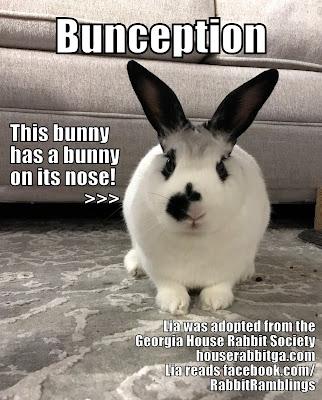 Bunspace Com Forum Funny Bunny Memes