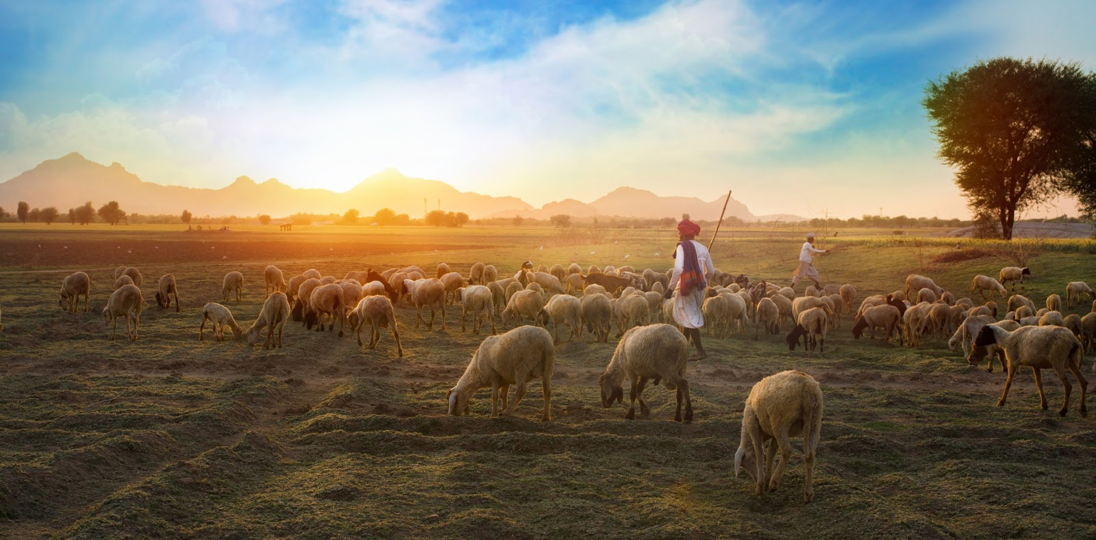 Shepherding our Thoughts to the Good Shepherd - Apostolic Theology