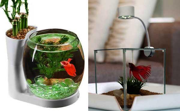 Model Aquarium Mini Ikan Cupang