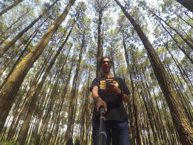 Objek Wisata  Hutan Pinus Imogiri Yogyakarta