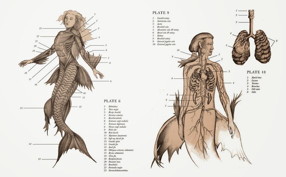tumblr ms015pQuOX1qa9m0zo3 1280 - Tra Frankenstein e Lovecraft: Il codice delle creature estinte