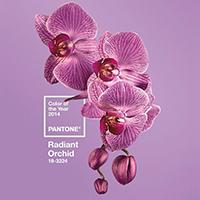 Radiant Orchid сияющая орхидея модный цвет года 2014