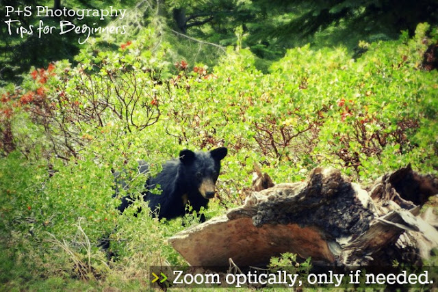 point-and-shoot tip 4: zoom optically, only sometimes