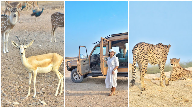 Sir Bani Yas island activity