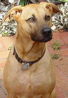 Sharmalan Thevar Dogs Of Tamil Nadu