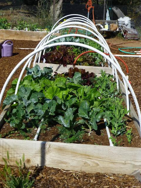 Growing Organic Choosing A Site Building Raised Beds Preparing Your Soil