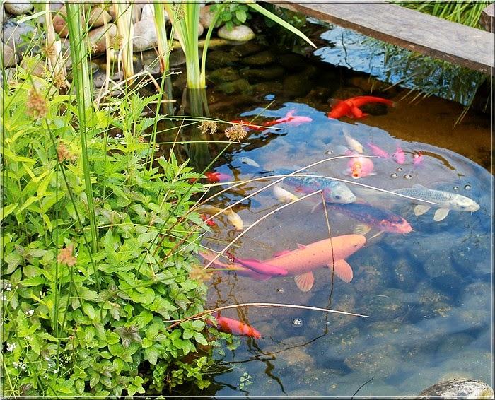 aux jardins d 39 am lie le bassin aux poissons l 39 endroit zen du jardin. Black Bedroom Furniture Sets. Home Design Ideas