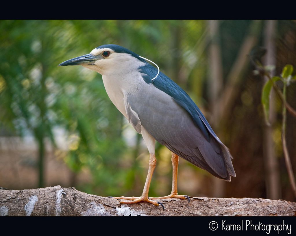 Adorable Bird Pics by KAMALAKANNAN K