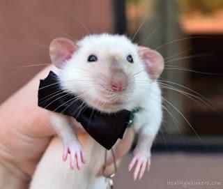 Jasper wearing his bowtie