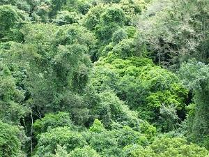 Orman Hukuku Nedir? Tarihçesi