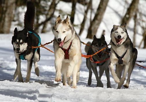 Using Human Glucosamine for Dog Treatment