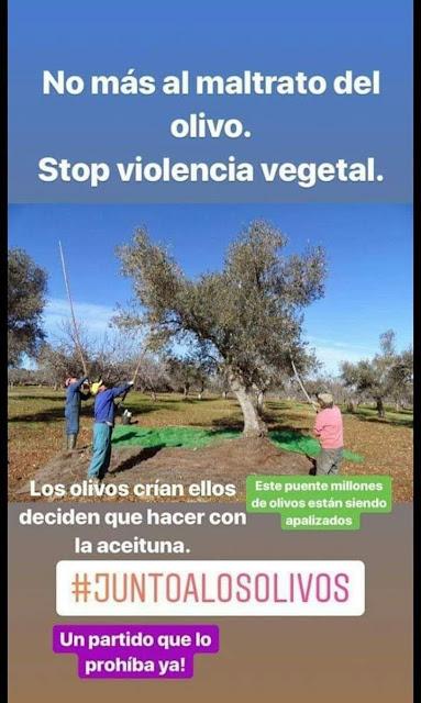 No al maltrato del olivo, stop violencia vegetal