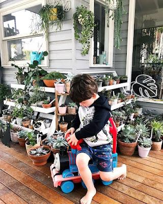 Rośliny trujące dla dzieci