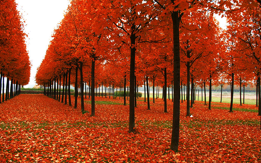autumn-photography-6
