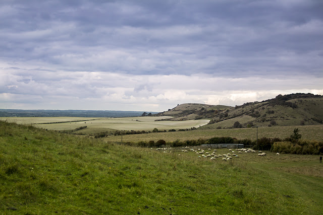 Ivinghoe Beacon and Sheep