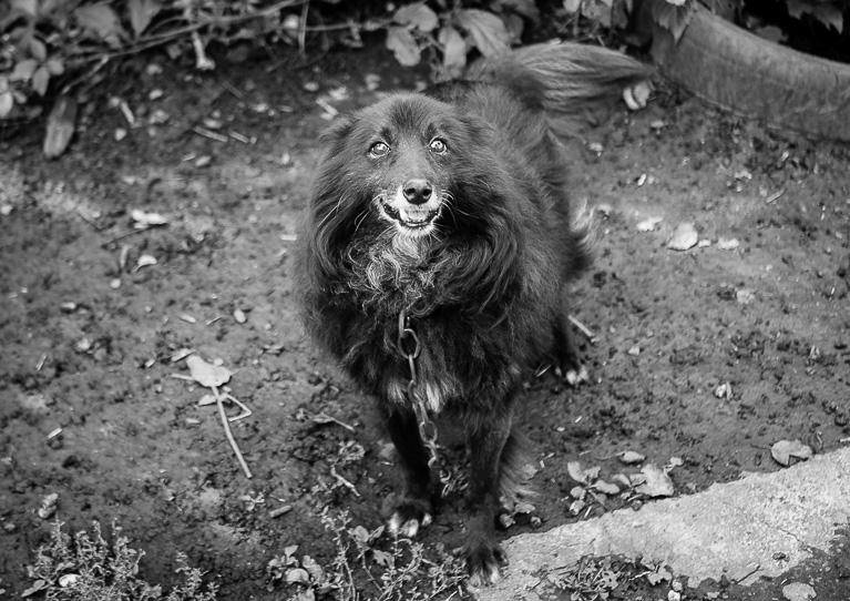 Фотография собаки в чёрно - белом цвете