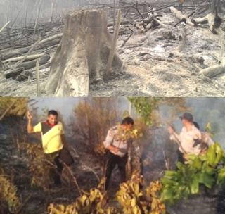 hutan terbakar dibukit bertabuh 2017