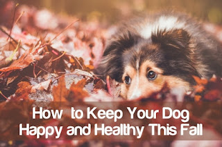 How to Keep Your Dog in Good Health For a Long And Happy Life
