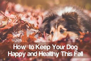 Comment garder votre chien en bonne santé pour une vie longue et heureuse