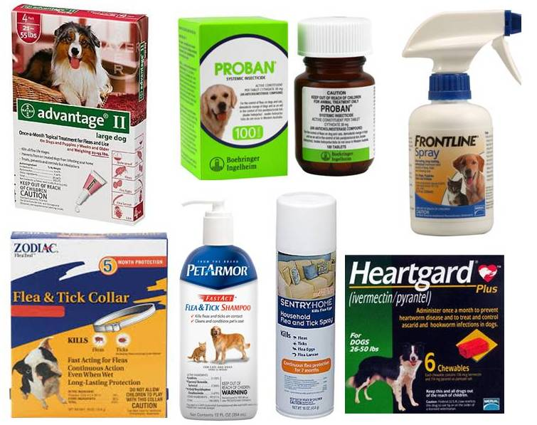 Prevent Damage From Flea Tick Heartworm Medications