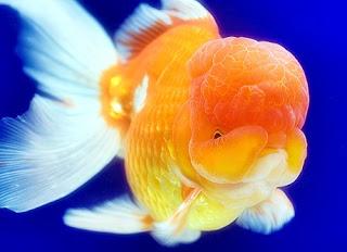 Ciri Ciri Ikan Sehat Lovedfish