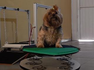 osciladores para cães