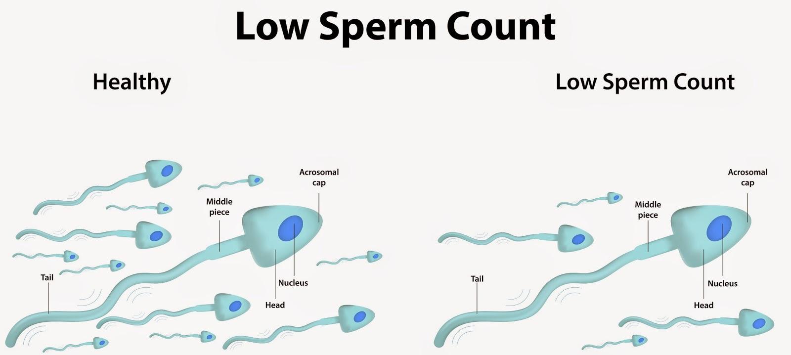Masterbation sperm count