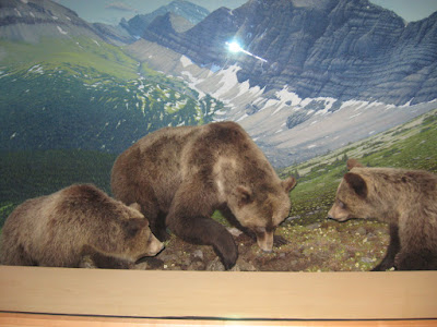 The Grizzly Bear display from my last trip to the museum