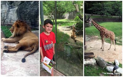 A collage picture with 3 separate images: A lion, Jackson standing with a cougar behind him, and a giraffe