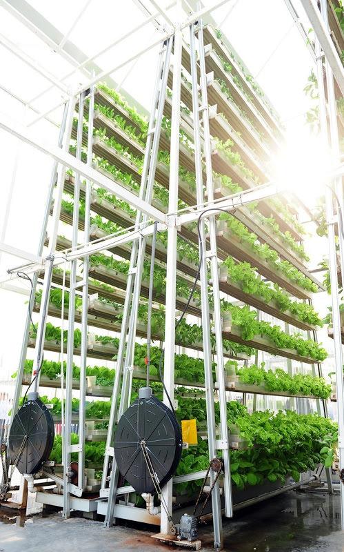 Pertanian Vertikal di Singapura