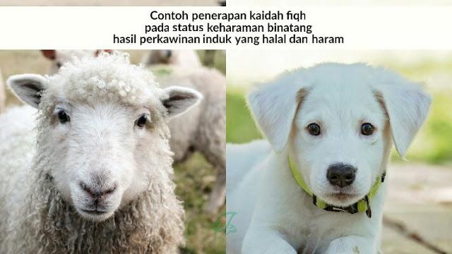 Haramnya binatang hasil perkawinan dua induk yang haram dan halal
