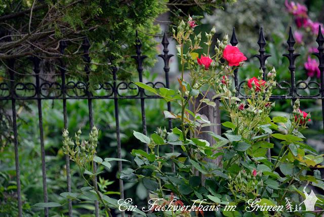 Rose, Burghausen