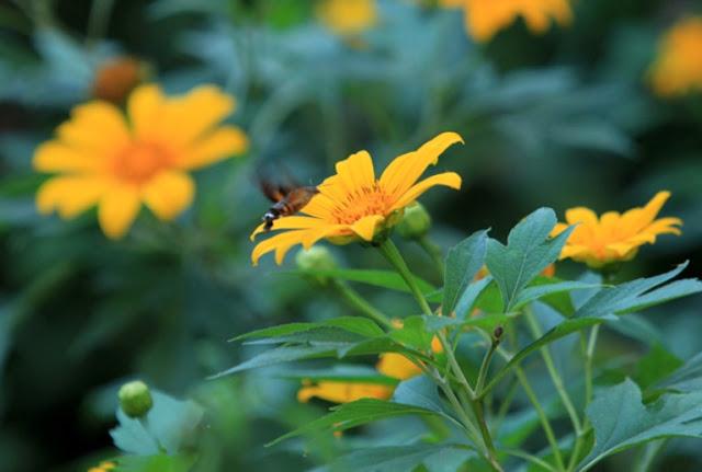 hoa da quy rat dep