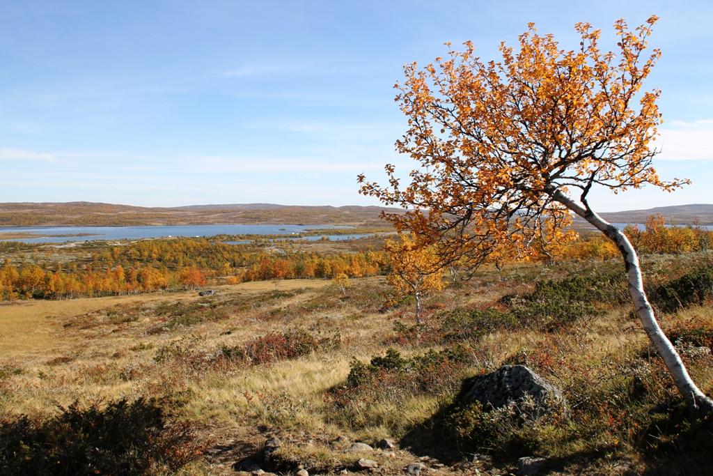 Andelen enslige i Oppland er lavest i Gausdal, Jevnaker og Lunner