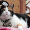 Jadi Kepala Stasiun, Ini Cara Tama Si Kucing Selamatkan Statsiun dari Kebangkrutan