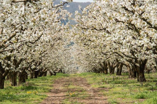 Απρίλτς - Η παράδοση τον μήνα Απρίλιο στον Πόντο