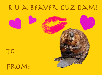 Valentines Day Cards Memes HD download