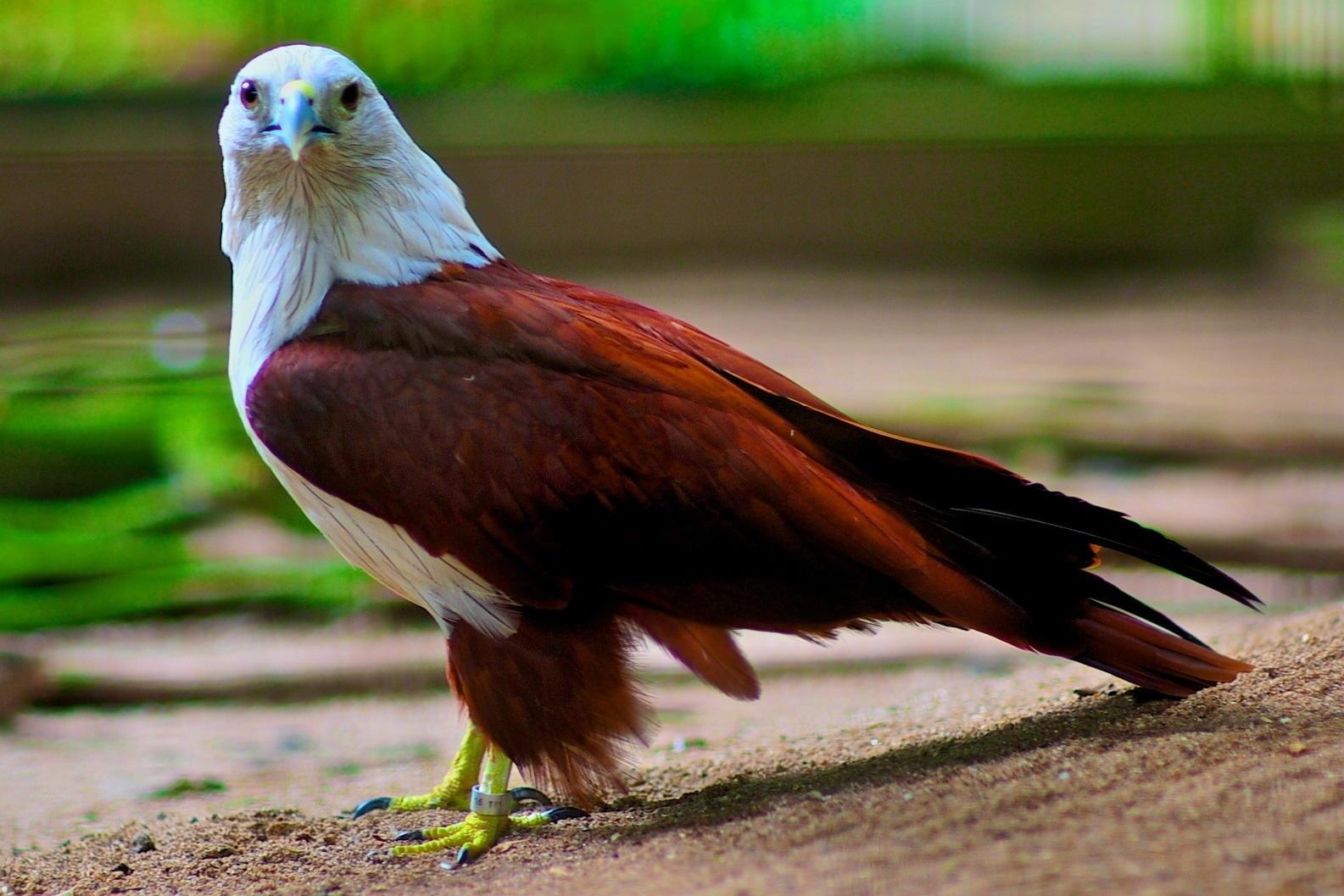 Flora dan Fauna Khas Jakarta  THE COLOUR OF INDONESIA