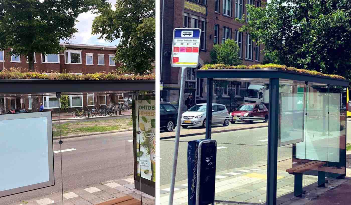 316 Bus Stops In The Netherlands Are Transforming Into Green Sanctuaries For Bees