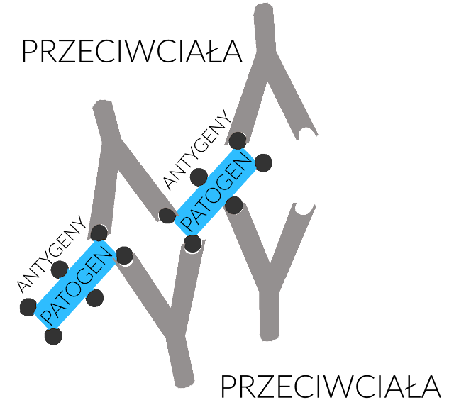 antygeny nowotwory