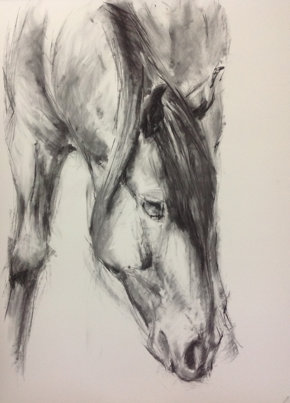 Vive L'Amour, charcoal drawing of horse, equestrian art, Arab horse