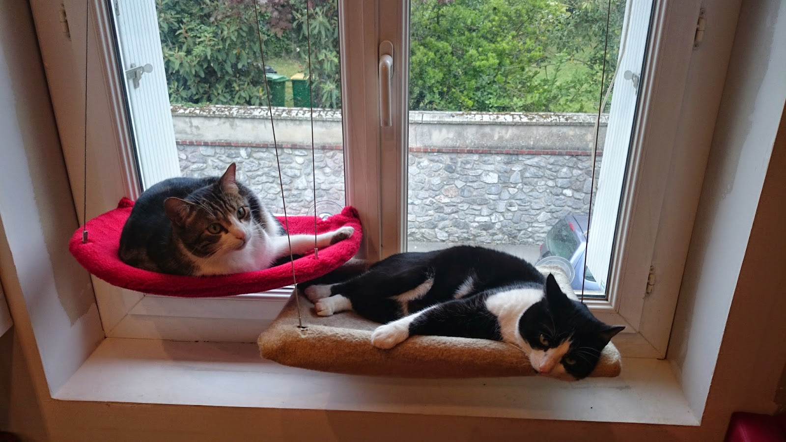Tout Pour Mon Chat Les Nouveaux Hamacs Selmak De Madeforcat