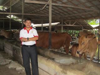 agen-nasa-di-bambang-mamasa-085232128980