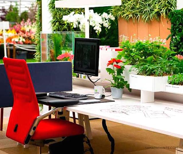 samadar-kinte-Saiba-como-as-plantas-podem-deixar-seu-dia-mais-produtivo-escritorio